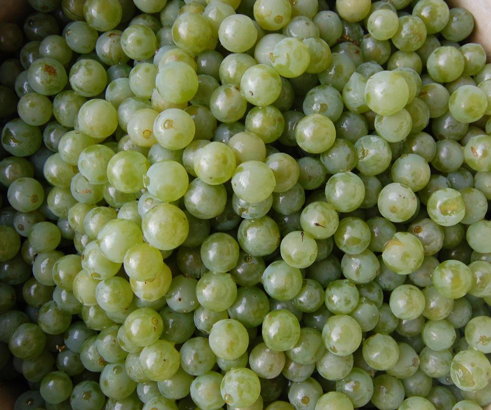 Green grape texture