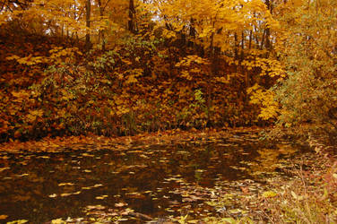 Autumn swamp 3 by OOOri