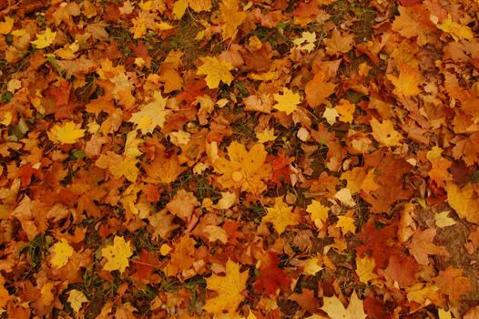 Texture autumn leaves