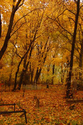 Old cemetery in Autumn 1
