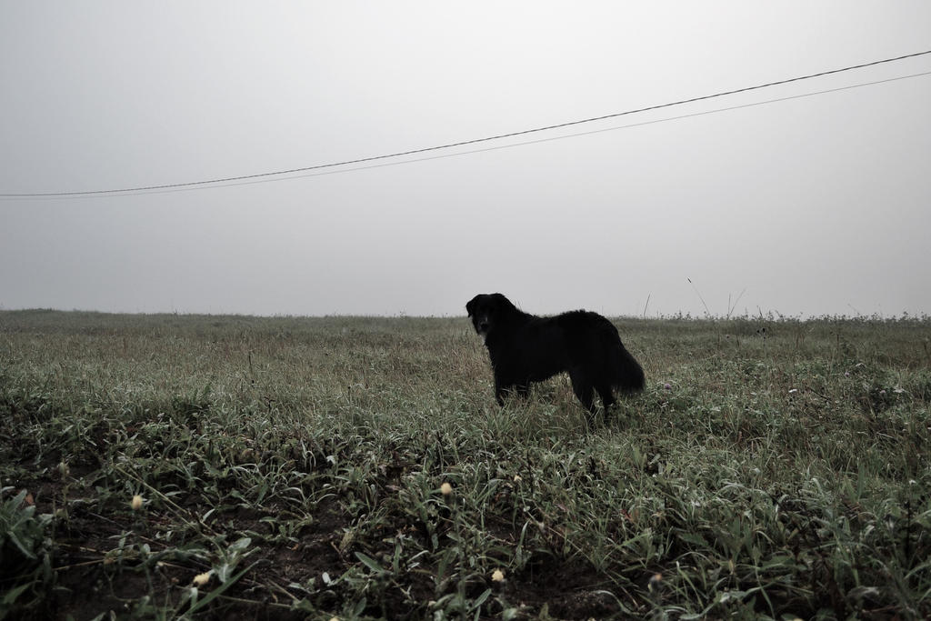 our dog in misty morning by why-you-are-shy