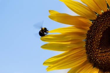 Bumble Bee by dementeddiva23