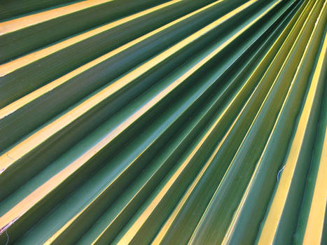 Palm stairway