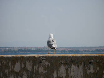 Seagull Watching a Town by blagi