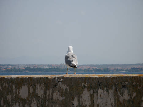 Seagull Watching a Town