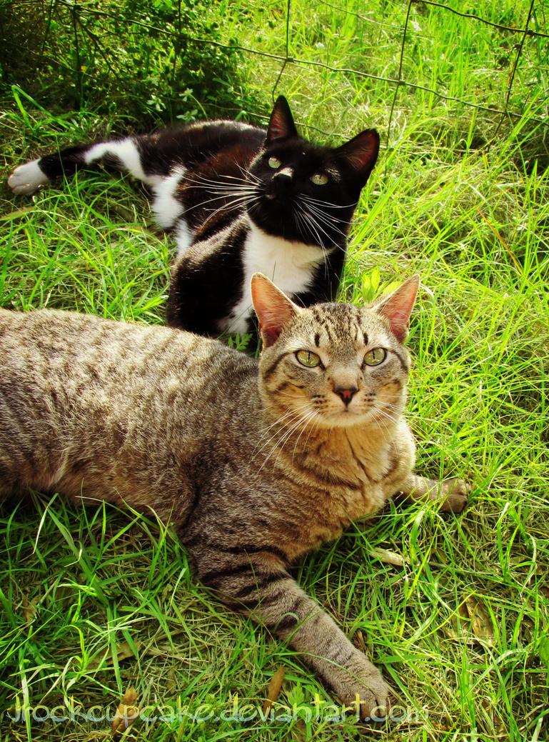 Hello old friends by Kitty-Mayhem