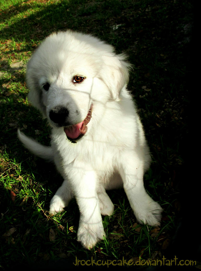 Look a puppy by Kitty-Mayhem
