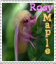 Rosy Maple Moth Stamp by MoonWarriorAutumn