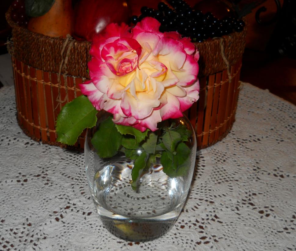 Simese Rose by MoonWarriorAutumn