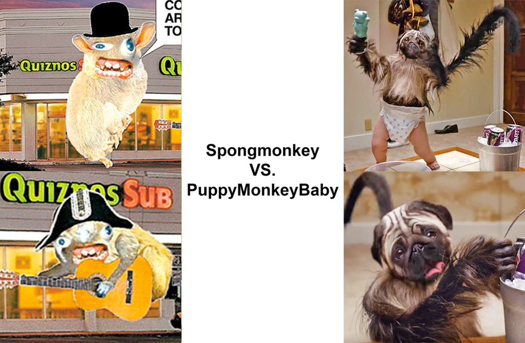 Spongmonkey