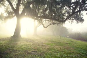 The Fog by MegSchutz
