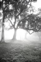 The Fog II by MegSchutz
