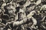 181114 Pilze by morbus-gravis