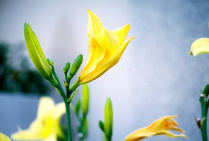Yellow Flower - 01