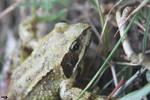 Froggy -1-
