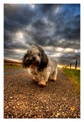 HDR Dog by SEKArt