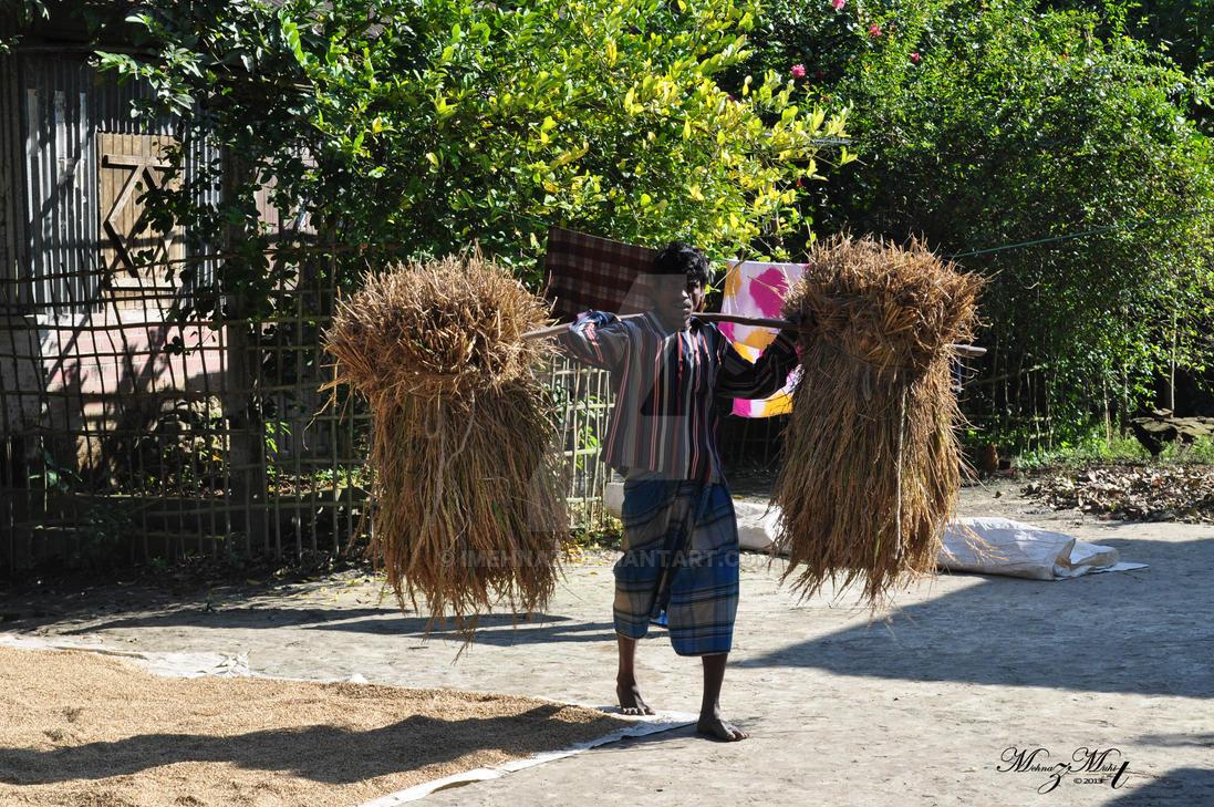 Man carrying rice plants [Bangladesh Series] by iMehnaz
