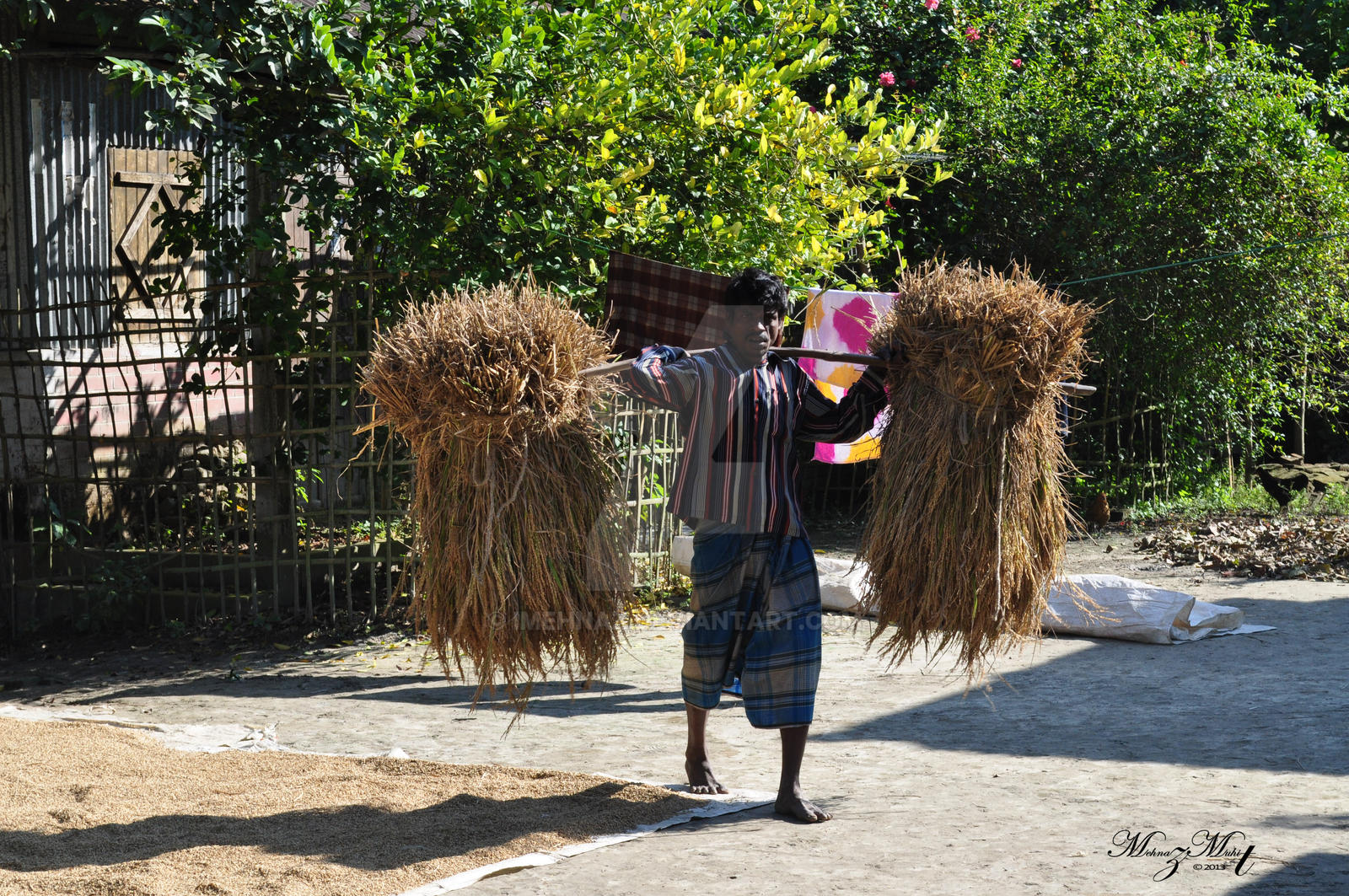 Man carrying rice plants [Bangladesh Series] by iMehnaz