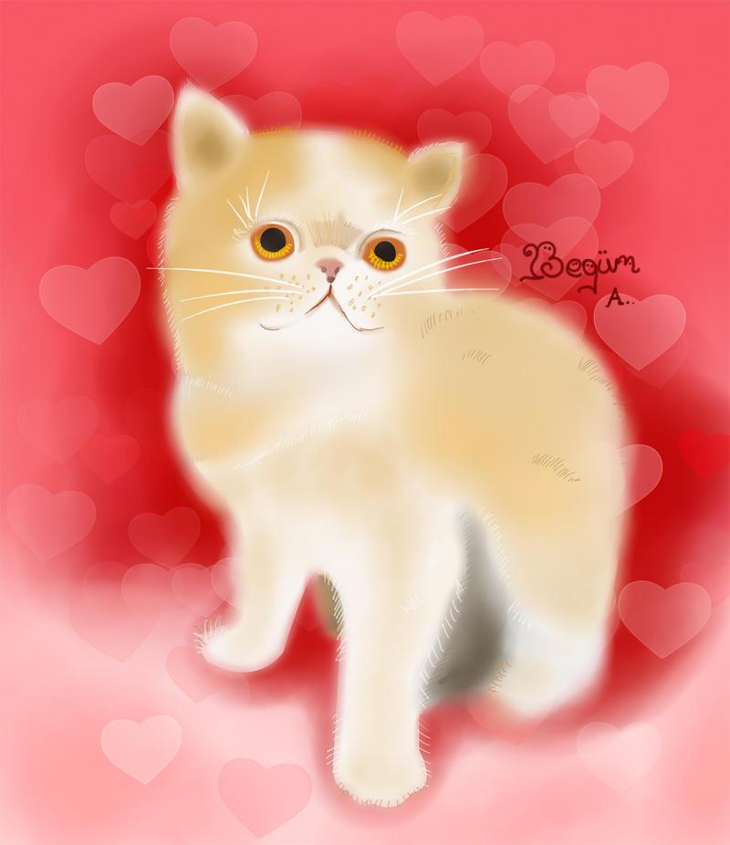 Valentine Kitti Ceviz by begumaa