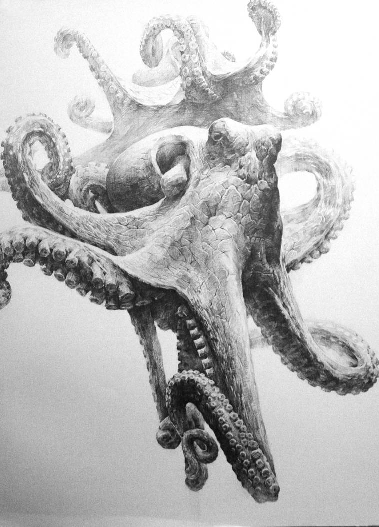 Octopus by indiart3612