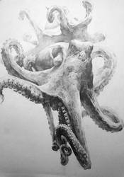 Octopus1 by indiart3612
