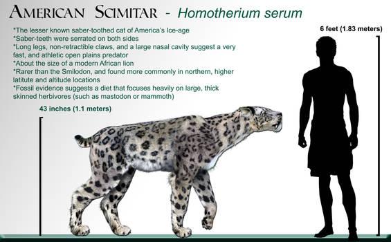 Homotherium_wikipedia