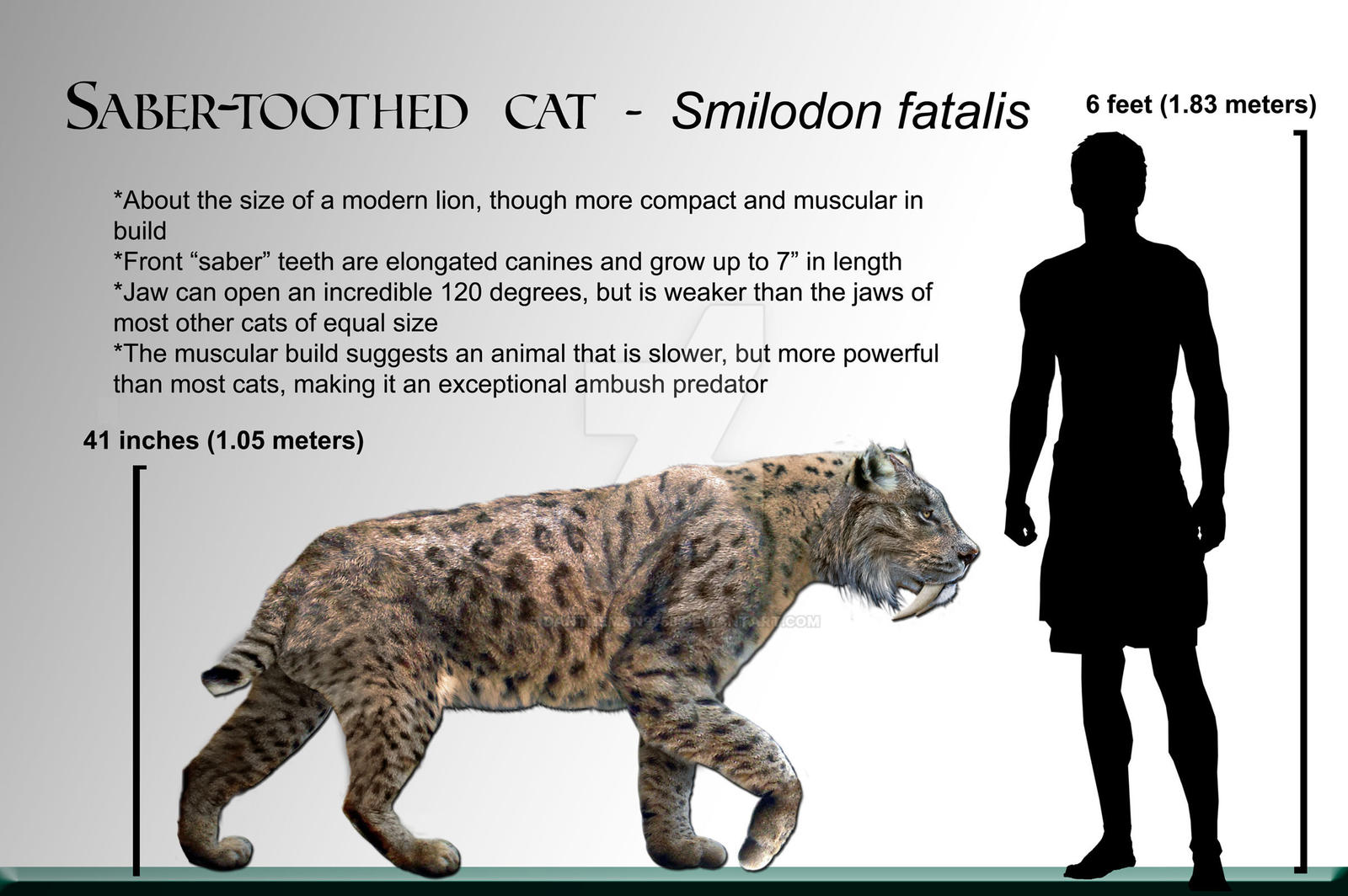 Wiki Smilodon by Dantheman9758