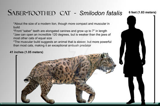 Wiki Smilodon