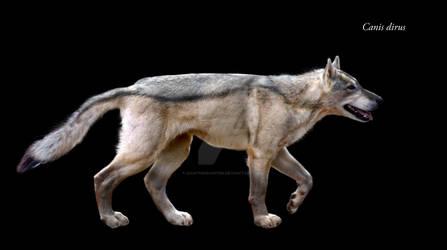 Canis dirus by Dantheman9758