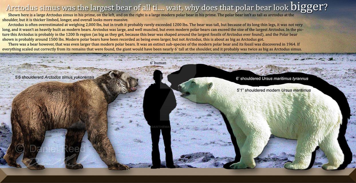 Polar bears are bigger by Dantheman9758 on DeviantArt