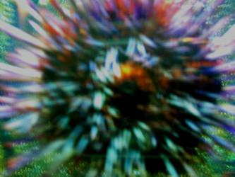 Sea Urchin by gymnast10