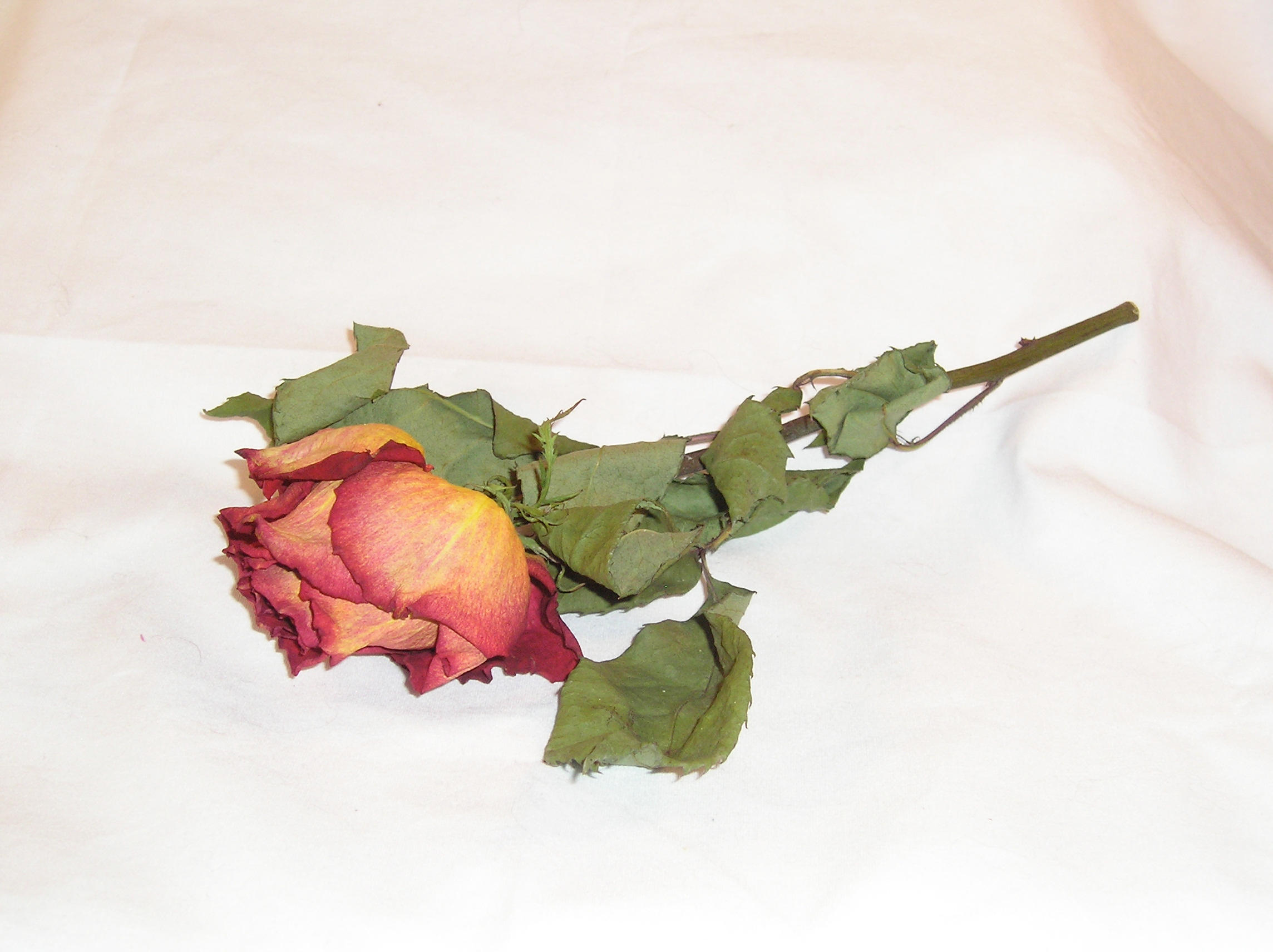 how to keep a dead rose