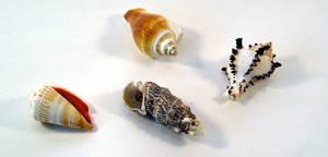 FREE STOCK, Sea Shells 3 by mmp-stock