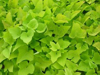 BASIC TERMS, Green Ivy Stuff