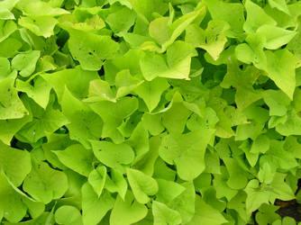 BASIC TERMS, Green Ivy Stuff 2