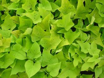 BASIC TERMS, Green Ivy Stuff 3