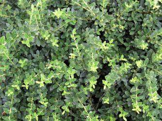 BASIC TERMS, Green Bush 1