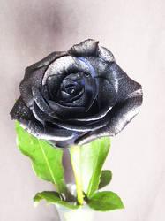 BASIC TERMS, Black rose