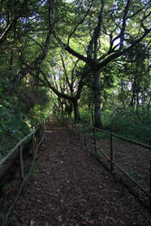 Madeira - Levada walk by vttiste