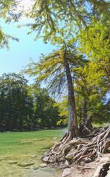 Pedernales falls state park by vttiste