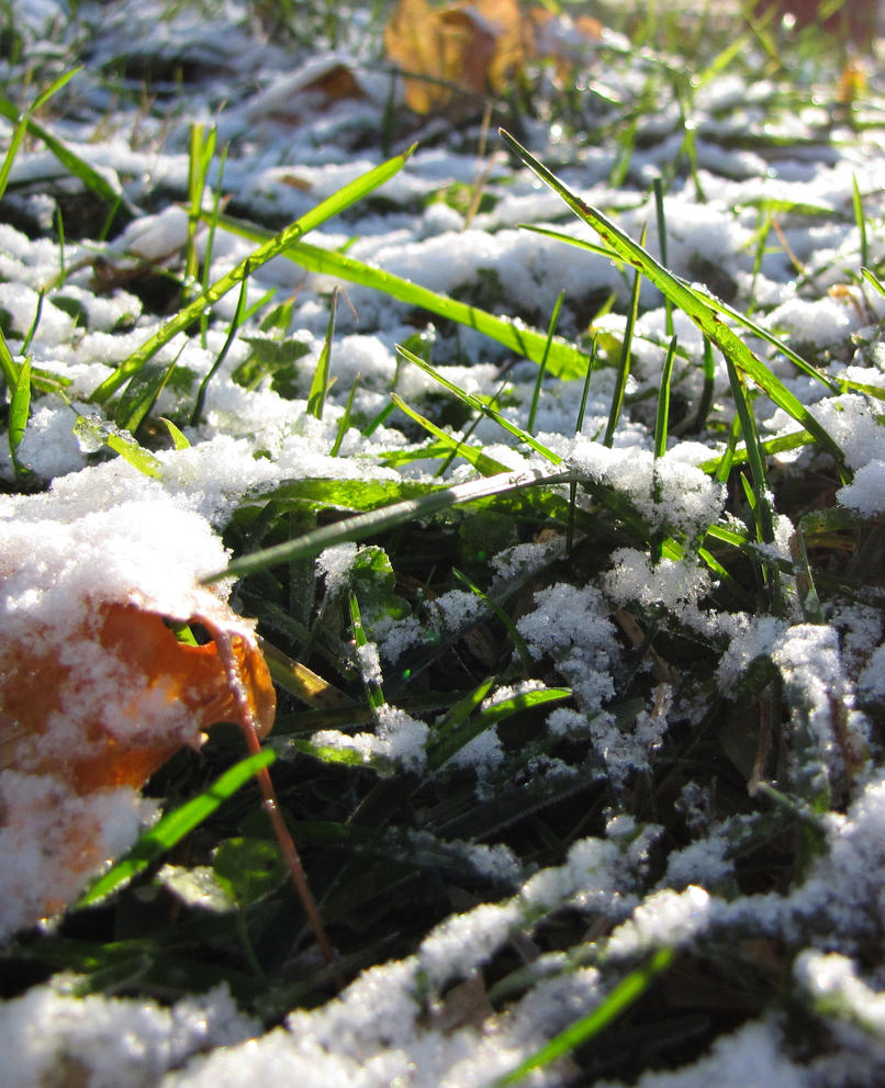 Snow Sprinkles by prettykittyangelkat on DeviantArt
