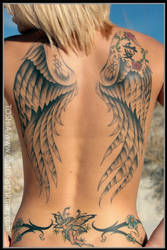 wings by johnfuller