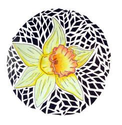 Daffodil by RanxStudio