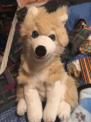 Husky for sale by TwinTowergal