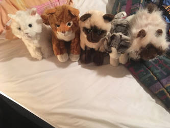 webkinz cats for sale!!! by TwinTowergal