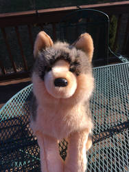 Douglas Niko wolf Mable Tahoe Elaine  by TwinTowergal