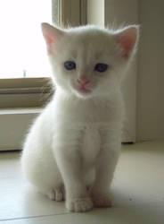 Kitten 2 by TheonlyAnimequeen