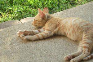 Kitten 5 by TheonlyAnimequeen