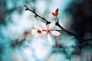 early spring by ajkabajka