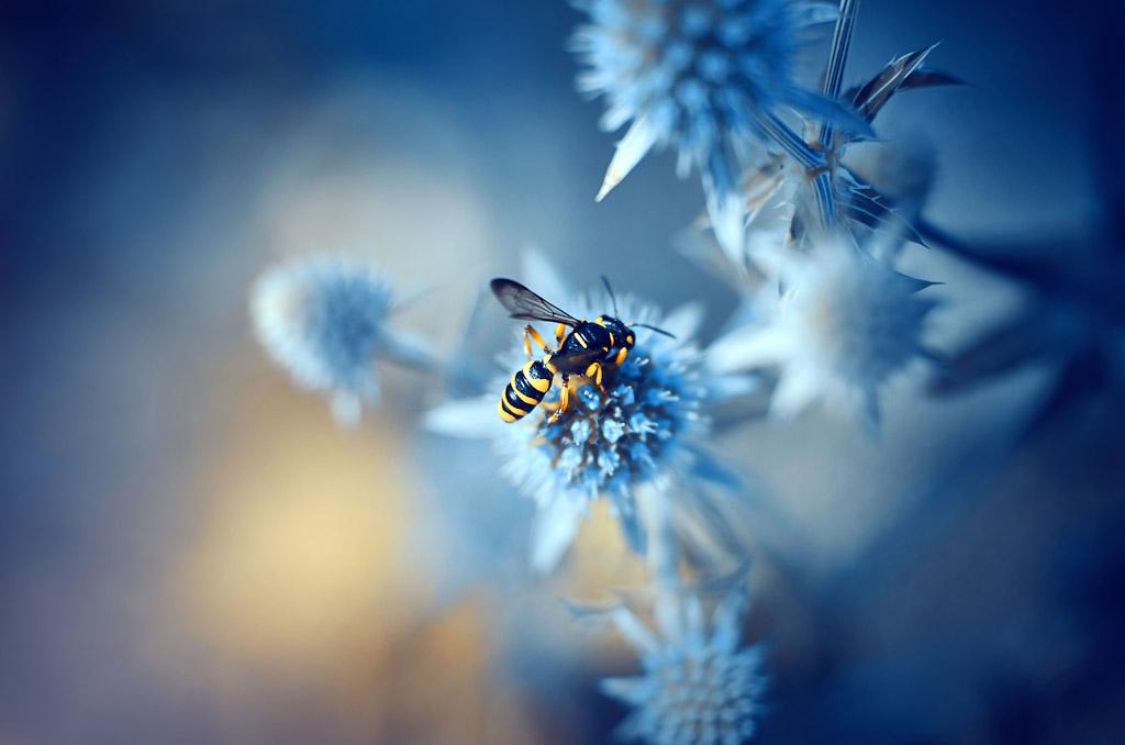 wasp by ajkabajka